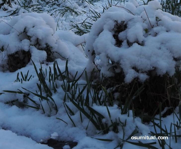 京都市北区と右京区では積雪4cmほど