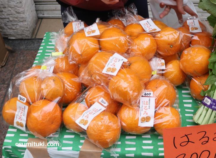 愛媛県伯方島のは食べたことがなかったので気になって購入