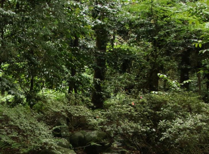 宇和島市立城北中学校にある校庭の「入らずの森」が珍百景で紹介