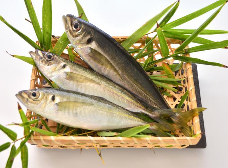 魚は京丹後のものなので新鮮