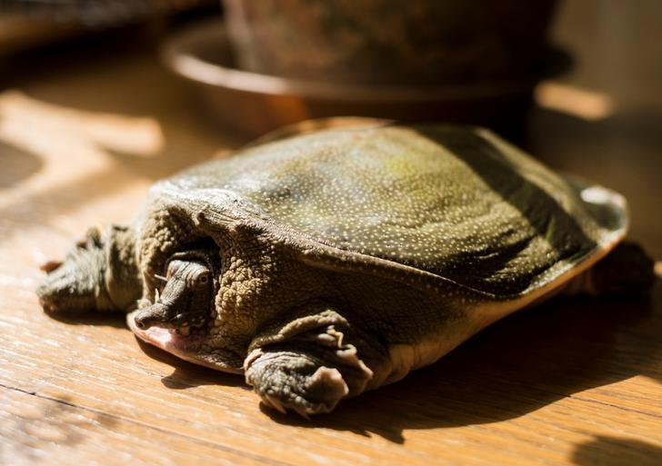 奥飛騨温泉郷で育つ「湯けむり美人すっぽん」が『満天☆青空レストラン』で紹介