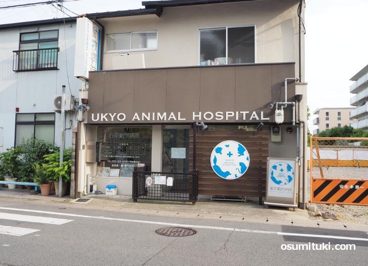 京都の動物病院「右京動物病院」の賄いランチが『サラメシ』で紹介