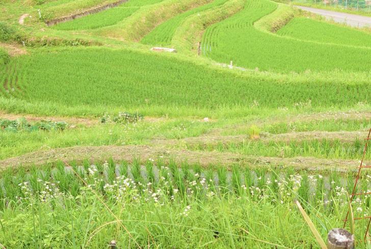 南アルプス市の棚田で農業を始めた青木昇さんが『人生の楽園』で紹介