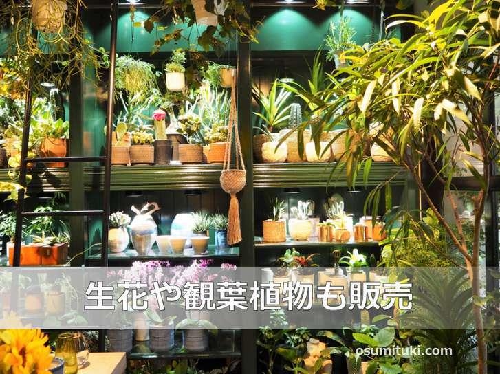 生花と観葉植物は販売されています