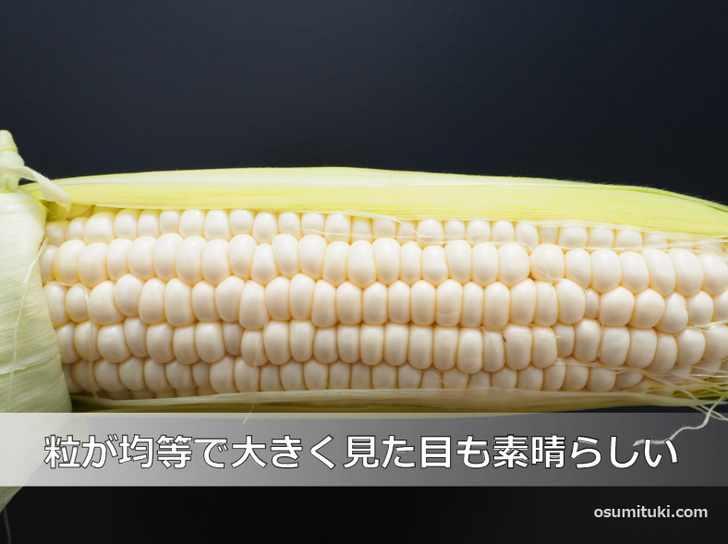 粒は均等で大きく、今年はトウモロコシの当たり年かも