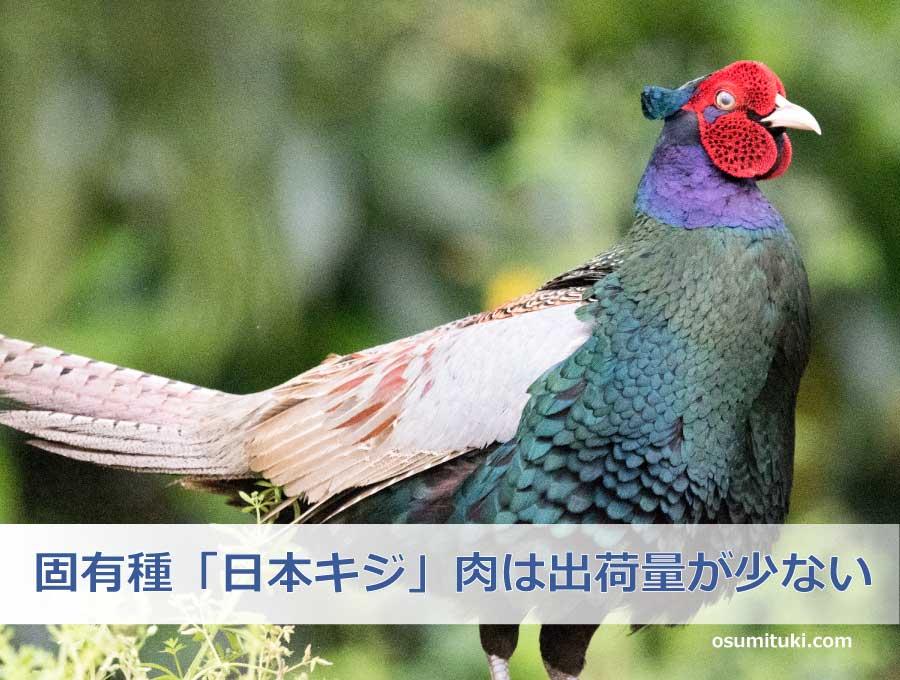 固有種「日本キジ」肉は出荷量が少ない