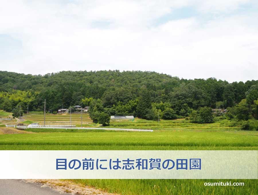お店の前には京都の米処と言われる南丹の田園風景が広がります