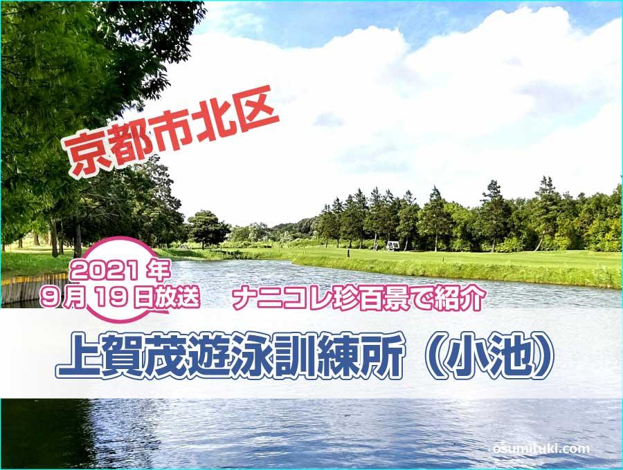 京都市北区の京都の名門ゴルフ場の池で真剣に泳ぐ子どもたちが【ナニコレ珍百景】で紹介