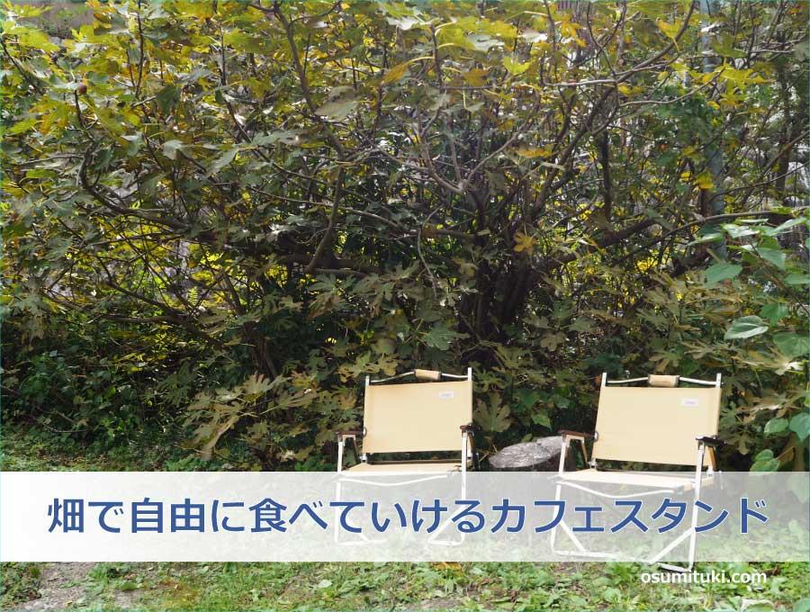 畑で自由に食べていけるカフェスタンド